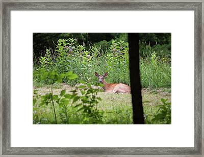 Del-1 Framed Print