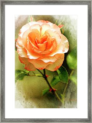Delaney Sisters Grandiflora Framed Print by Geraldine Scull