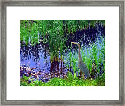 Delaware Heron Framed Print by Kim