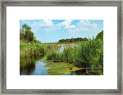 Delaware Marsh Framed Print