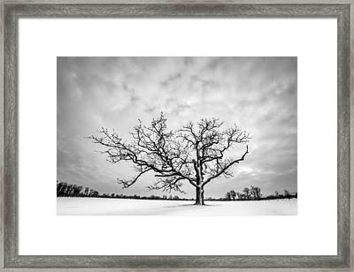 Framed Print featuring the photograph Delaware Park Winter Oak by Chris Bordeleau
