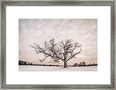 Framed Print featuring the photograph Delaware Park Winter Oak - Color by Chris Bordeleau