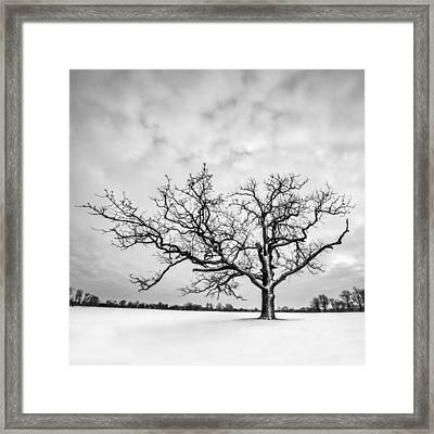 Framed Print featuring the photograph Delaware Park Winter Oak - Square by Chris Bordeleau