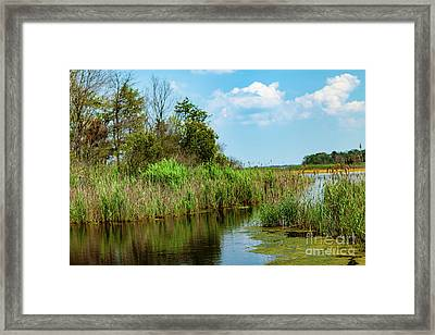 Delaware Wetlands Framed Print