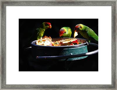 Delicacies Framed Print by Robert Boyette