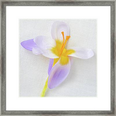 Framed Print featuring the photograph Delicate Art Of Crocus by Terence Davis