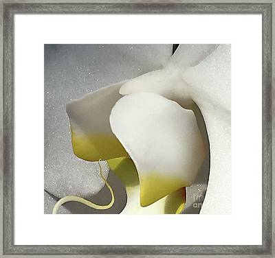 Delicate As Egg Yolk Framed Print by Sherry Hallemeier