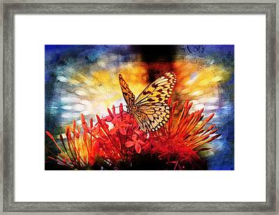 Blue Framed Print featuring the photograph Delicate Beauty by Aaron Berg