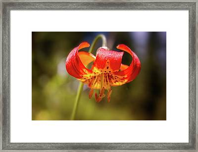 Delicate Beauty Framed Print
