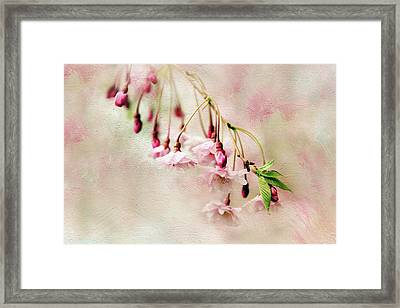 Delicate Bloom Framed Print by Jessica Jenney