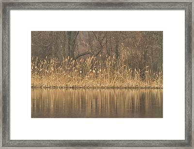 Delicate Calm Framed Print by Karol Livote