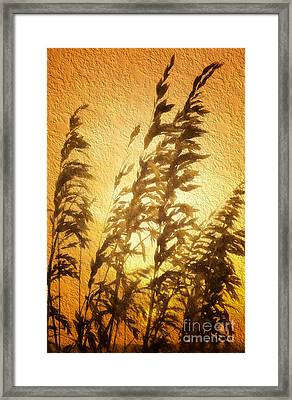 Delicate Dawn II Framed Print by Dan Carmichael