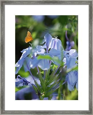 Delicate Delight Framed Print