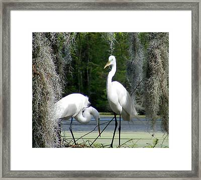 Delicate Egret Romance Framed Print by Elena Tudor