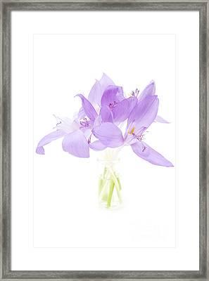 Delicate Framed Print by Gabriela Insuratelu