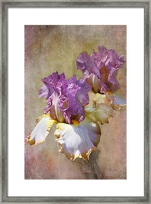 Delicate Gold And Lavender Iris Framed Print