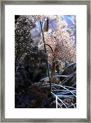 Delicate Grass Plumes Framed Print