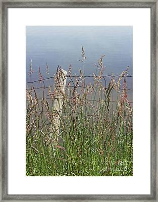 Delicate Grasses Along Fence Framed Print