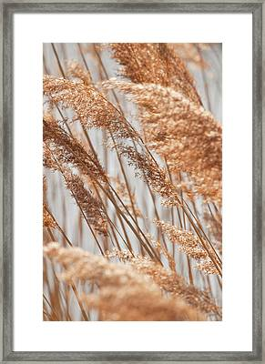 Delicate Grasses In Spring Framed Print