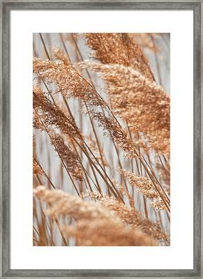 Delicate Grasses In Spring Framed Print by Christine Amstutz