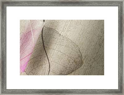 Delicate In Design Framed Print