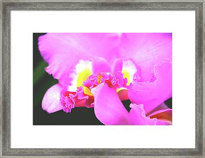 Delicate In Pink Framed Print