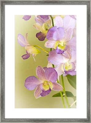 Delicate Framed Print by Jade Moon