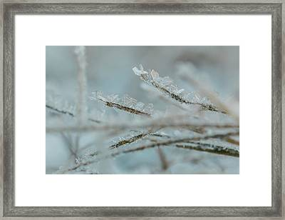 Delicate Morning Frost  Framed Print
