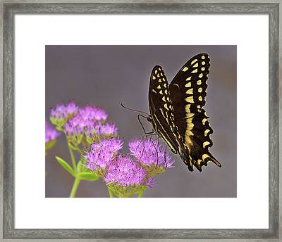 Delicate Nature Framed Print