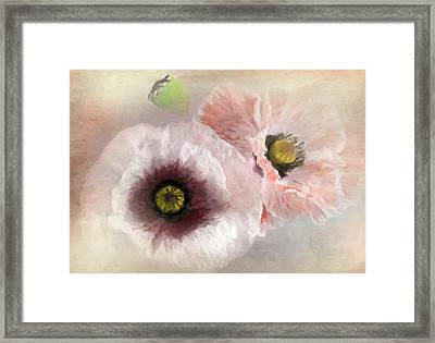 Delicate Pastel Poppies Framed Print