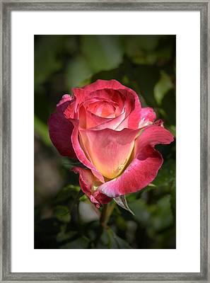 Delicate Petals Framed Print