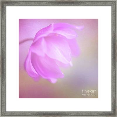 Delicate Pink Anemone Framed Print
