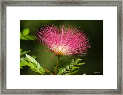 Delicate Pink Bloom Framed Print