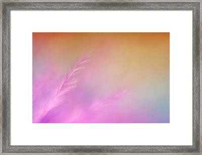 Delicate Pink Feather Framed Print