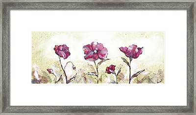 Delicate Poppy II Framed Print by Shadia Derbyshire