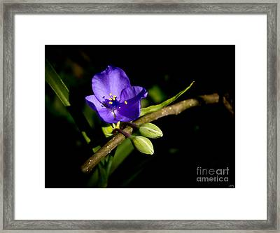 Delicate Purple Flower Framed Print by Imagery by Charly