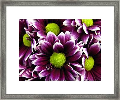 Delicate Purple Framed Print