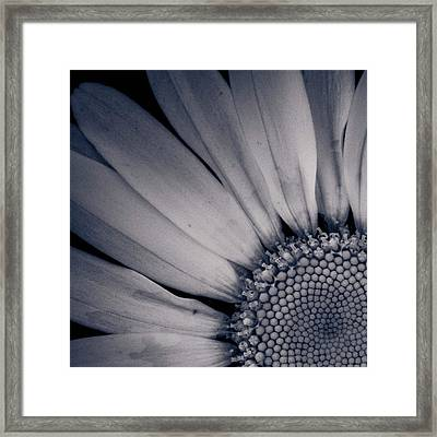 Delicate Ratio Framed Print by Adam Smith