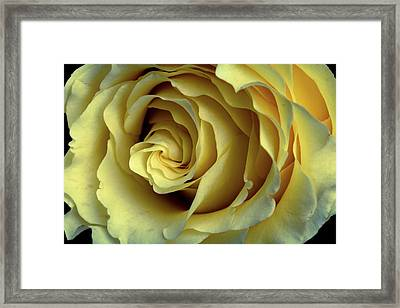 Delicate Rose Petals Framed Print by Deborah Klubertanz