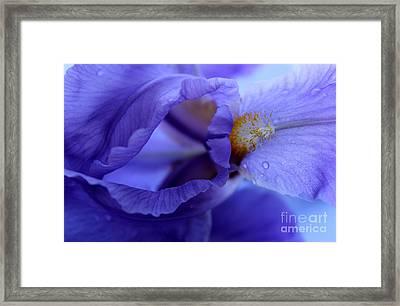 Delicate Sensation Framed Print