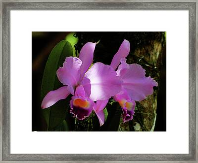 Framed Print featuring the photograph Delicate Shades by Blair Wainman