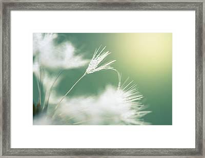 Delicate Framed Print by Shane Holsclaw