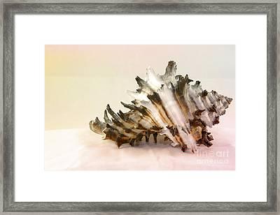 Delicate Shell Framed Print by Teresa Zieba