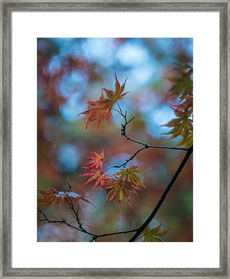Delicate Signs Of Autumn Framed Print by Mike Reid