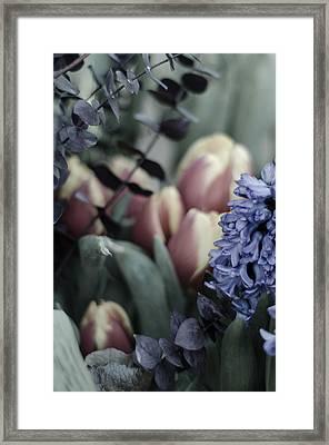 Delicate Springtime Framed Print