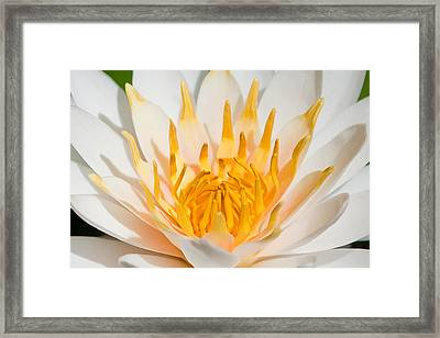 Delicate Touch Framed Print