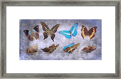 Delicate Tranquility Framed Print by Betsy Knapp