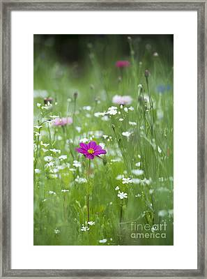 Delicate Wildflower Meadow Framed Print by Tim Gainey