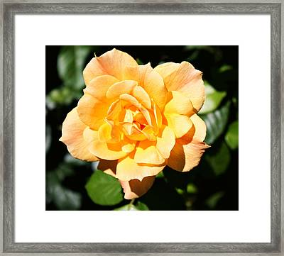 Delicate Yellow Petals Framed Print by Cathie Tyler