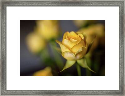 Framed Print featuring the photograph Delicate Yellow Rose  by Terry DeLuco